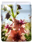 Close-up Of Pink Mullein Flowers Duvet Cover