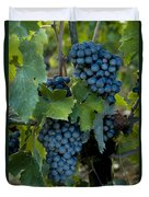 Close View Of Chianti Grapes Growing Duvet Cover