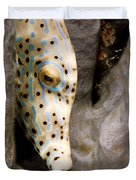 Closeup Of A Cleaner Shrimp Lysmata Duvet Cover