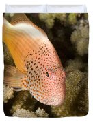 Closeup Of A Freckled Hawkfish Duvet Cover