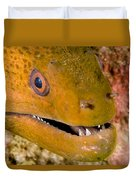 Closeup Of A Giant Moray Eel Duvet Cover