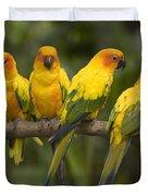 Closeup Of Four Captive Sun Parakeets Duvet Cover