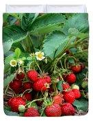 Closeup Of Fresh Organic Strawberries Growing On The Vine Duvet Cover