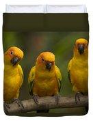 Closeup Of Three Captive Sun Parakeets Duvet Cover