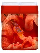 Clown Shrimp Duvet Cover