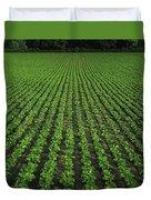 Co Tipperary, Ireland Sugar Beet Duvet Cover