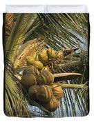 Coconuts Cluster At Los Tules Resort Duvet Cover
