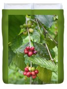 Coffea Coffee Growing In The Balinese Countryside. Duvet Cover