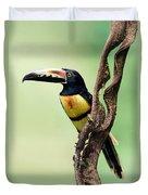Collared Aracari Pteroglossus Duvet Cover