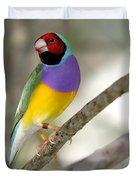 Colorful Gouldian Finch Duvet Cover