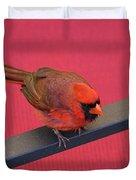 Colour Me Red - Northern Cardinal - Cardinalis Cardinalis Duvet Cover