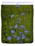 Common Chicory Wildflowers #1 Duvet Cover