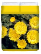 Common Coltsfoot  Duvet Cover
