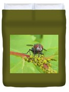 Common Fly Licking Up Aphid Nectar     May         Indiana    Duvet Cover