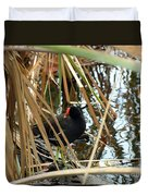 Common Gallinule Duvet Cover