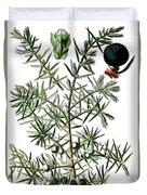 common juniper, Juniperus communis Duvet Cover