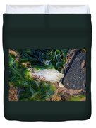 Common Piddock - Pholas Dactylus Duvet Cover