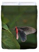 Common Rose Butterfly Duvet Cover