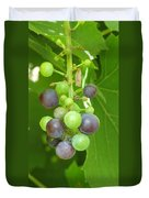 Concord Grapes On The Vine Duvet Cover