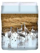Congregating Sandhill Cranes Duvet Cover