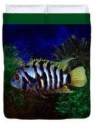 Convict Cichlid Fish Duvet Cover