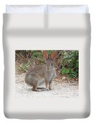 Cottontail Rabbit Surprised To Have Company Duvet Cover