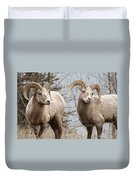 Couple Of Rams- Banff National Park Duvet Cover