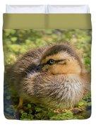 Coy Duckling Duvet Cover