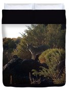 Coyote At The Petrogyphs 2 Duvet Cover