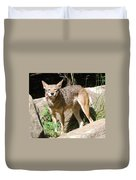 Coyote Grin Duvet Cover