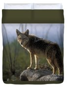 Coyote In Ocotillo Trees Duvet Cover