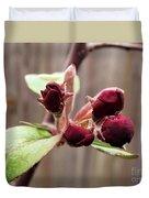 Crab-apple Tree Flower Buds Duvet Cover