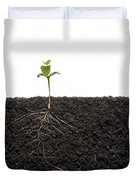 Cross-section Of Soybean Seedling Duvet Cover