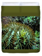 Crown Of Thorns In Pohnpei Duvet Cover