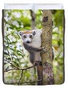 Crowned Lemur Madagascar Duvet Cover