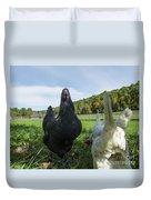 Curious Chicken Duvet Cover