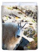 Curious Goat On The Mount Massive Summit Duvet Cover
