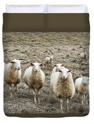 Curious Sheep Duvet Cover