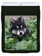 Cute Alusky Puppy In A Bunch Of Plant Foliage Duvet Cover