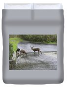 D-a0033 Mule Deer Duvet Cover