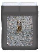 D-a0051-dc Gray Fox Pup Duvet Cover