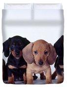 Dachshund Puppies  Duvet Cover