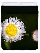 Daisy Fleabane 2 Duvet Cover