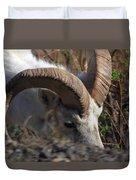 Dall Sheep Ram  Duvet Cover
