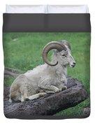 Dall's Sheep Duvet Cover