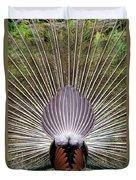 Dancing Peacock, Kanha National Park Duvet Cover