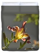 Dark Red Day Lily With Sun Shining Through I Duvet Cover