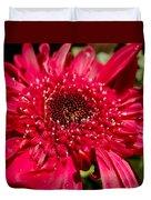 Dark Red Gerbera Daisy Duvet Cover