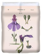 Darwins Orchis Pyramidalis, Illustration Duvet Cover