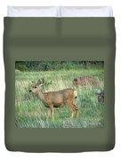 Deer In Boulder Colorado Duvet Cover